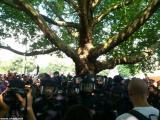 Baumbesetzung auf dem Oranienplatz