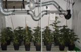 Indoorplantage